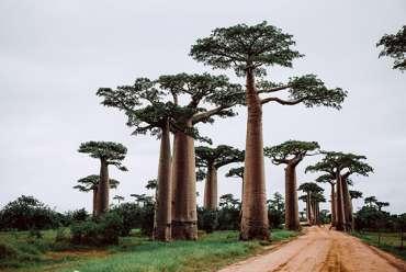 visiter-afrique